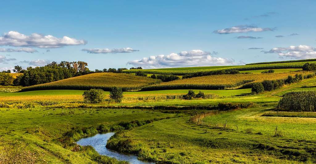 Maïs hybride et maïs transgénique : quelle différence ? Ici, des champs de maïs. © AlexasFotos, DP
