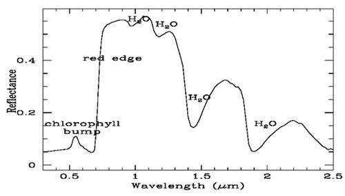 Le « bord rouge », ou red edge, caractéristique de la végétation sur Terre. Les feuilles végétales réfléchissent fortement le rayonnement infrarouge, se protégeant ainsi d'un chauffage excessif qui détruirait la chlorophylle. Ce bord rouge se situe entre 0,7 et 0,8 μm. Si l'œil était sensible à ces longueurs d'onde, la végétation nous apparaîtrait comme très rouge et très brillante. Le pic de réflectivité légèrement au-dessus de 0,5 μm est quant à lui responsable de la couleur verte (pour notre œil) de la végétation. Ce bord rouge est une signature biologique caractéristique et très visible signalant la présence de végétation sur Terre. De telles signatures pourraient être recherchées avec les ELT sur les planètes extrasolaires. © Seager & Ford, 2002
