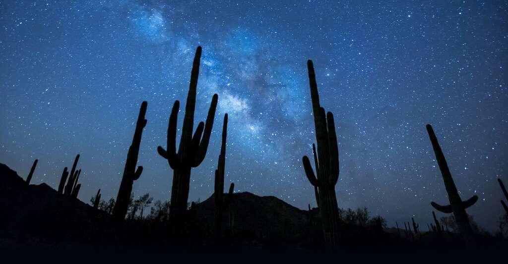 Parc des cactus en Arizona. © Skeeze, DP