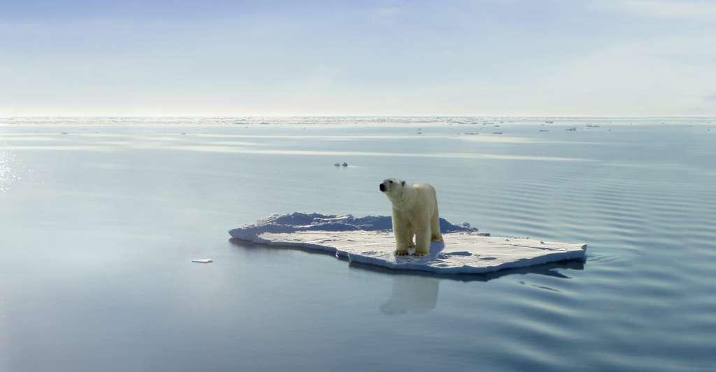 Au début de l'Éocène, il y a environ 55 millions d'années, il n'y avait pas de calotte glaciaire et les températures moyennes étaient comprises entre +9 et +14 °C au-dessus de celles que nous connaissons aujourd'hui. © Jan Will, Adobe Stock