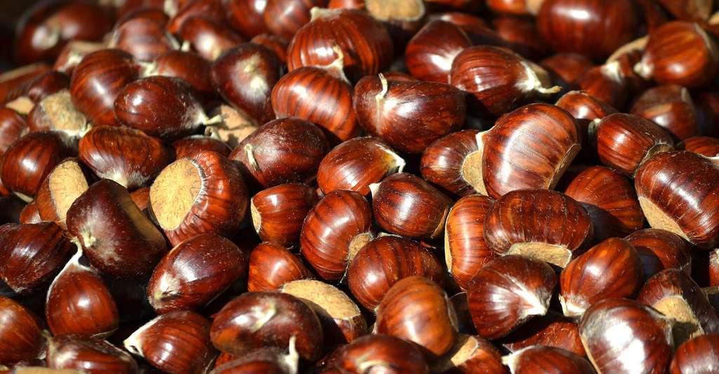 Châtaignes nouvelle récolte. © FilieraSi, Pixabay, DP