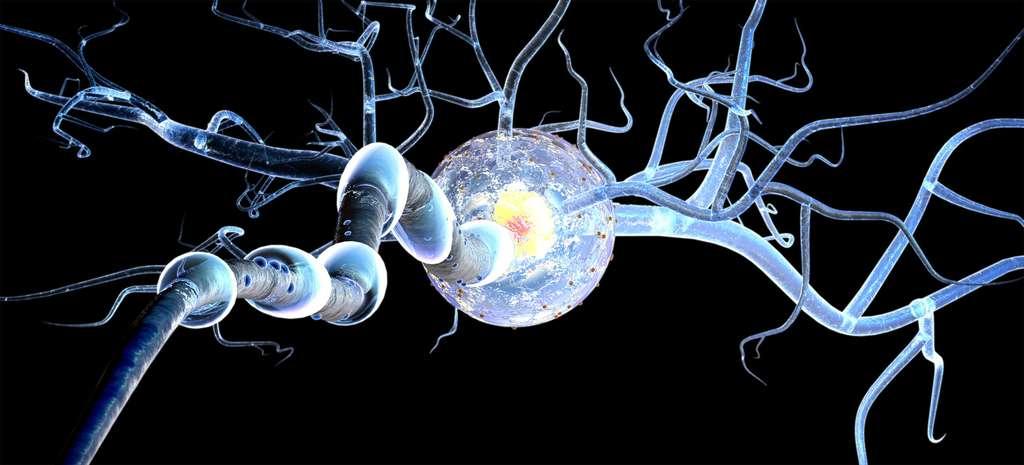 Dans la douleur chronique, les neurones sensoriels sont hyper-activés. © ralwel, Fotolia