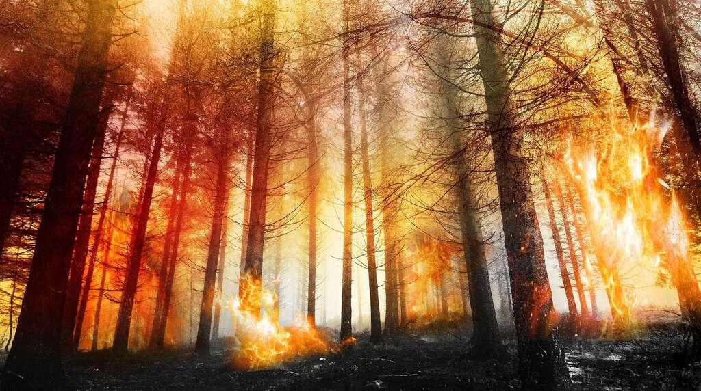 Les feux de forêt émettent du CO2. © Threes shots, Pixabay, DP