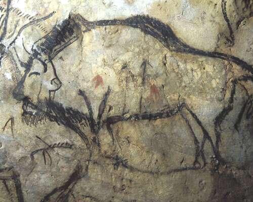 Fig. 1. L'hypothèse de la magie de la chasse s'appuyait sur la présence d'animaux atteints par des flèches ou des sagaies, comme ce bison de la Caverne de Niaux (Ariège). © Cliché J. Clottes. Tous droits réservés