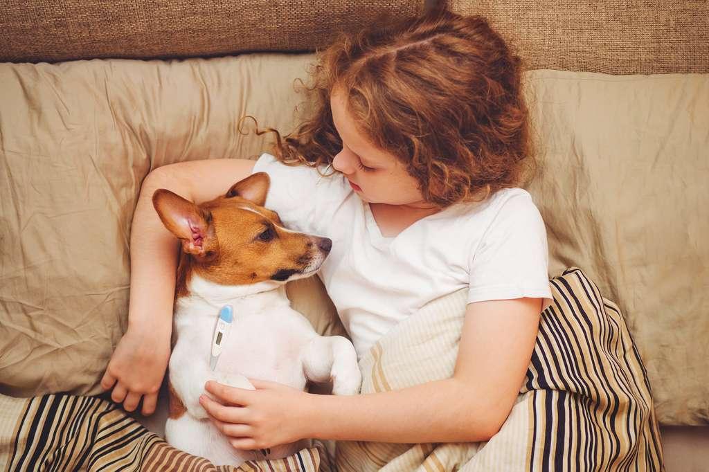 Aux États-Unis, une épidémie de grippe H3N2 fait rage dans la population canine. À tel point que les vétérinaires mettent en garde. Comme chez les humains, le virus pourrait être fatal aux chiens les plus faibles. © ulkas, Fotolia