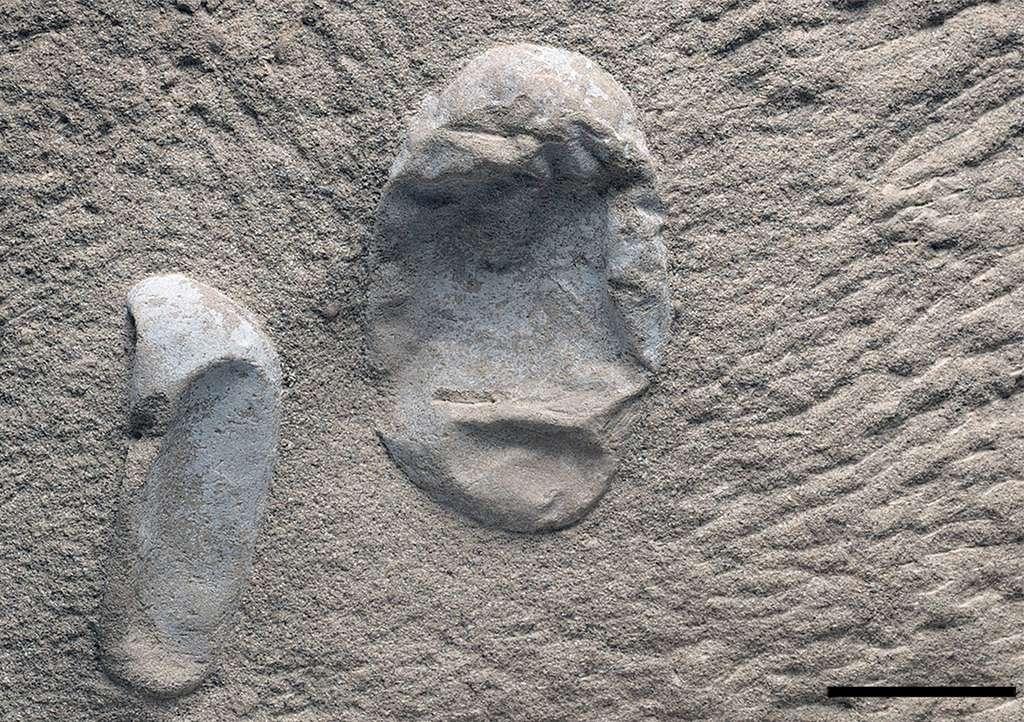 Les œufs de ptérosaures retrouvés sont déformés mais pas briser ce qui s'explique par le fait qu'il devait être souple au moment où ils ont été enfouis. © Wang et al., Science