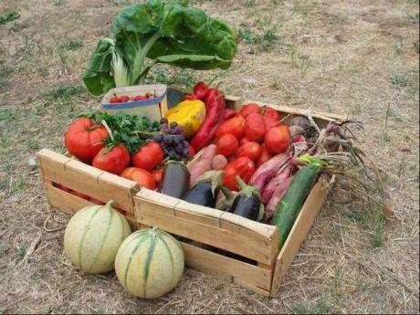 Un panier de fruits et légumes tout près de chez soi, pour consommer locavore ! © 20minutes.fr