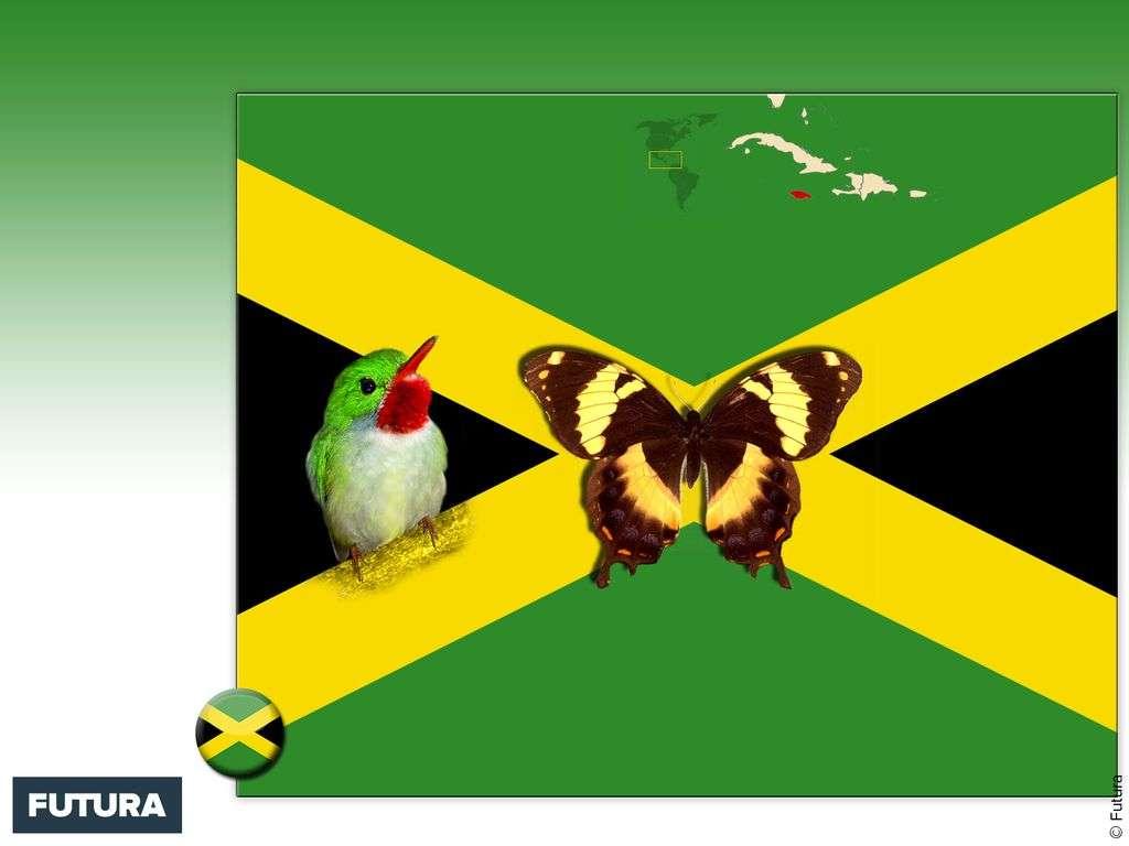 Fond Décran Drapeau Jamaïque