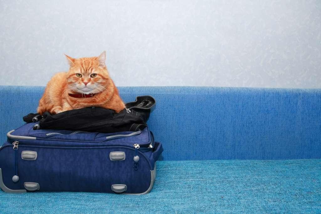 Le chat n'apprécie guère le changement : évitez de bouleverser ses habitudes. © cosma, Fotolia