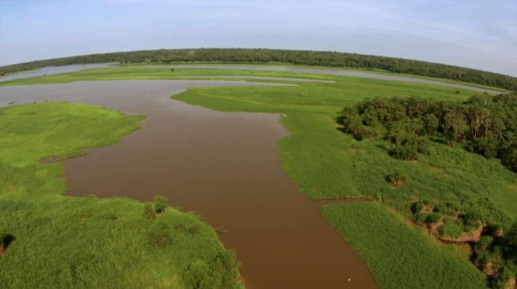 La réserve de Mamirauá, le long de l'Amazone, est devenue un lieu de vie pour une large population de botos. © French Connection Films