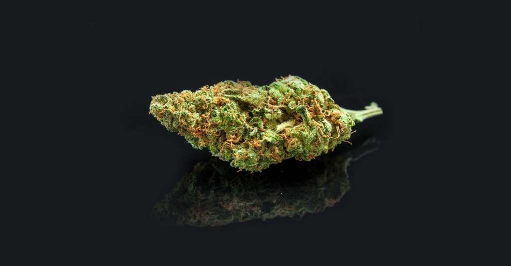 Marijuana. © BestStockFoto, Shutterstock