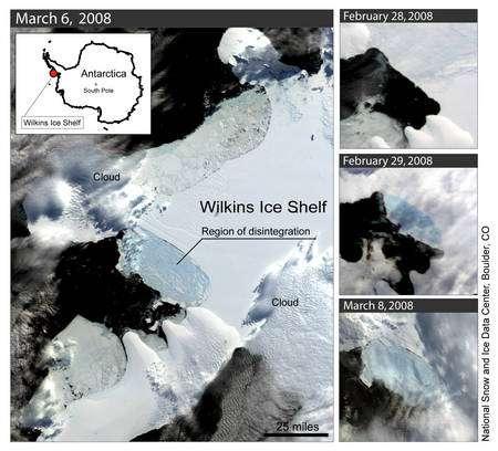 Figure 1. Série d'images produites par l'instrument Modis, à bord des satellites Aqua et Terra. La plus grande, à gauche, a été prise le 6 mars. Celles de droite, de haut en bas, datent du 28 février, du 29 février et du 8 mars. On distingue une partie du plateau Wilkins (wilkins iceshelf) et la partie en train de se désagréger (region og disintegration). © NSIDC, Nasa, University of Colorado