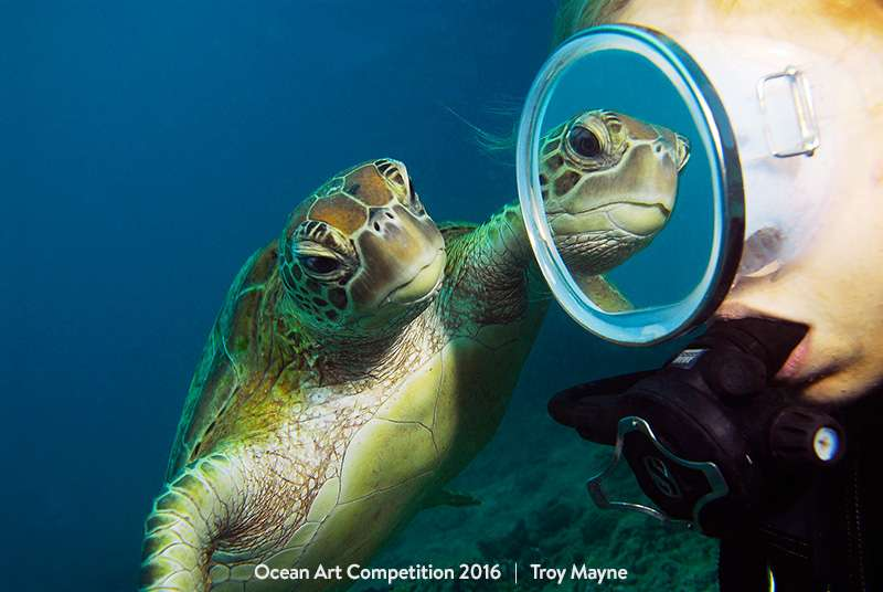 Une tortue verte qui sympathise avec un plongeur dans la Grande barrière de corail. © Troy Maine, Ocean Art Underwater Photo Competition