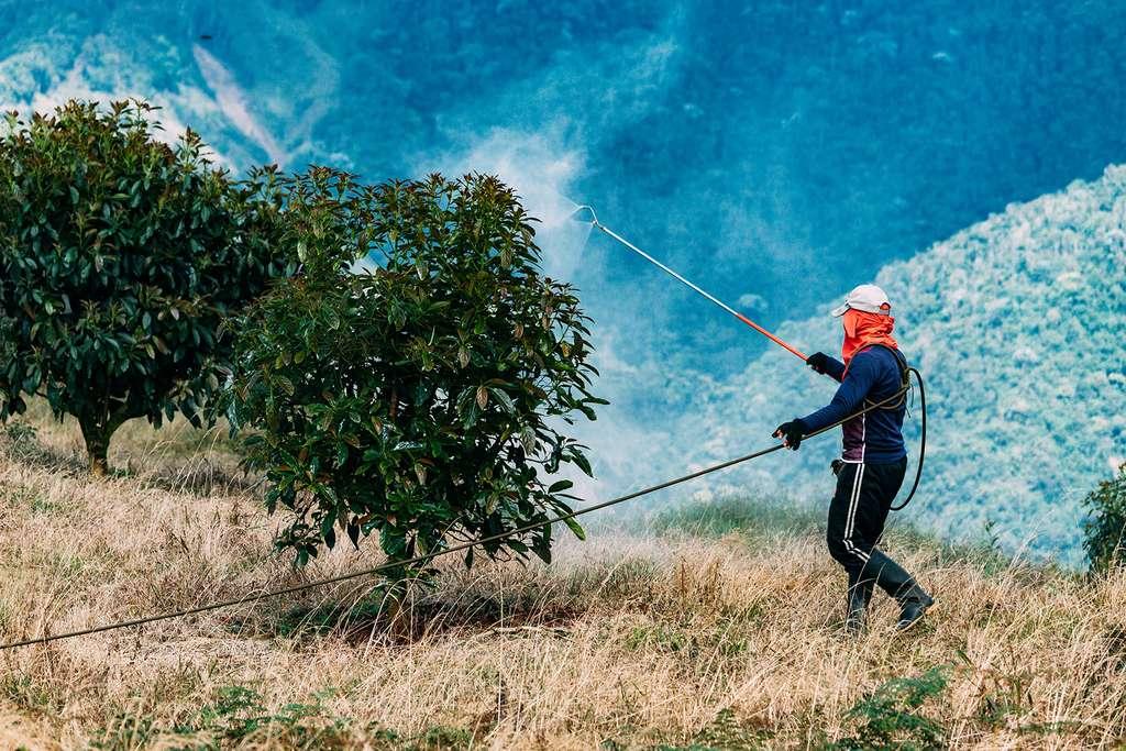 Monoculture + chaleur tropicale + état défaillant = abus de pesticides. © Hugoalejandro, Adobe stock