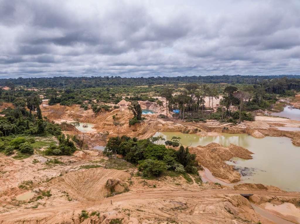La déforestation en Amazonie brésilienne a plus que doublé entre janvier 2019 et janvier 2020. © Imago Photo, Adobe Stock