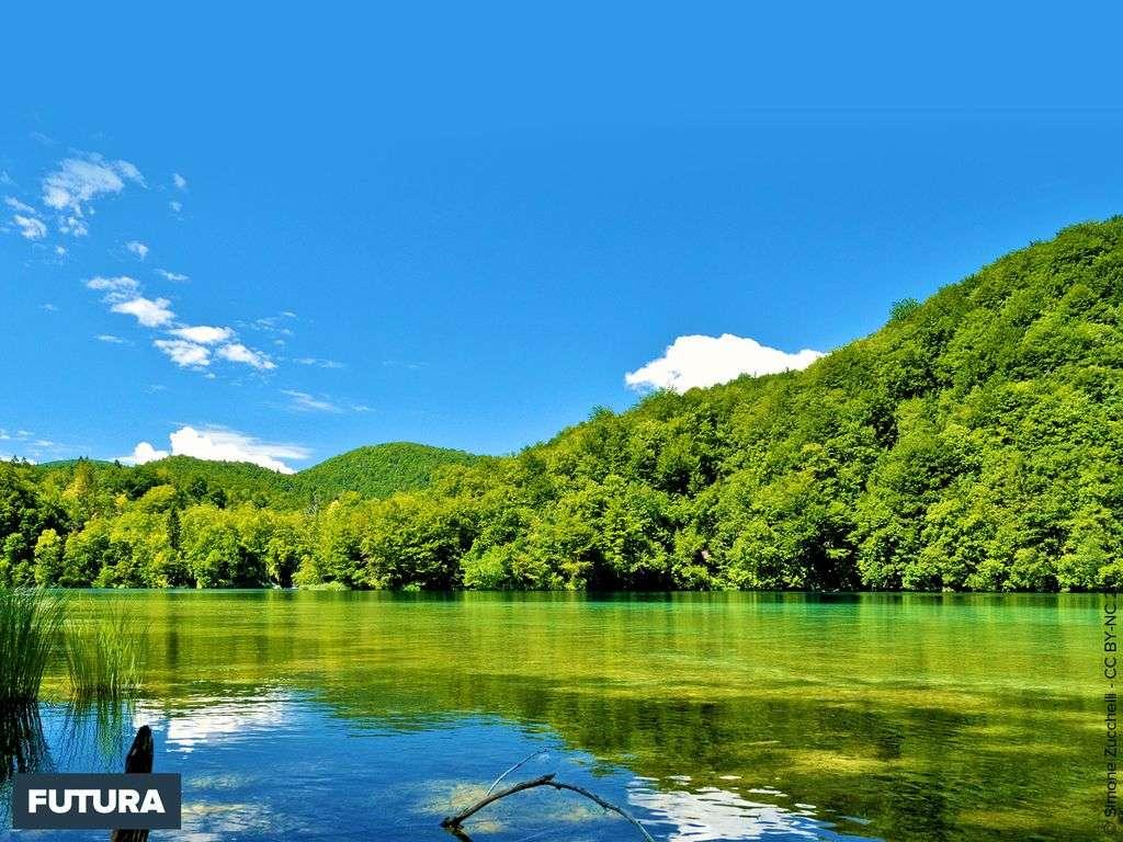 Eté au bord du lac de Plitvice - Croatie