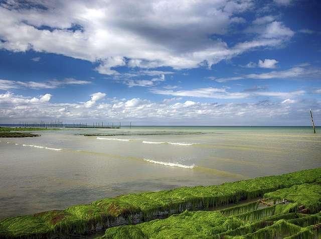 La plupart des fermes à huîtres sont situées dans des régions côtières, où il peut exister un risque de contamination par les eaux usées. © A Guy Taking Pictures, Flickr, CC by 2.0