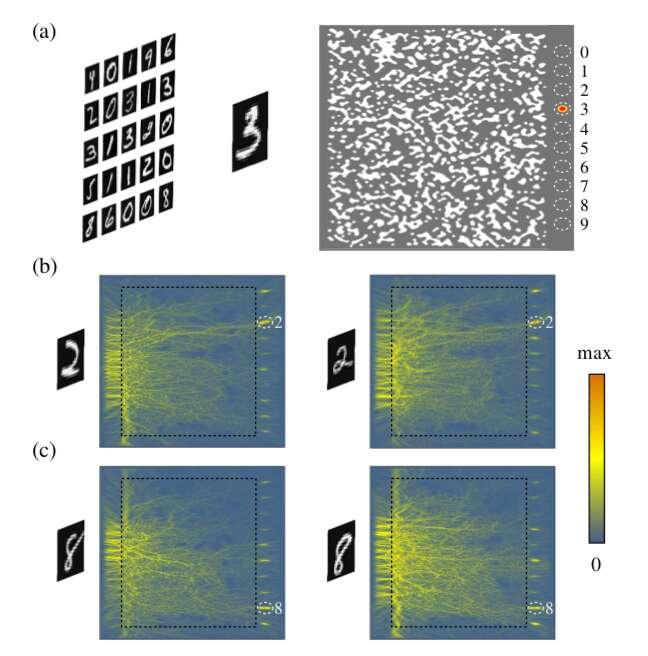 Le principe de fonctionnement du réseau neuronal nanophotonique. Les images des chiffres sont diffractées par le verre pour que la lumière se focalise vers un point de sortie déterminé (a). Une fois « entraîné », le verre est ainsi capable de reconnaître des chiffres 2 ou 8 écrits de différents façons (b et c). © Erfan Khoram et al, Photonics Research, 2019