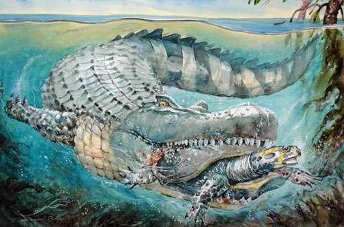 Dans les grands estuaires de la Mer Pebas, vivait un caïman géant, Purussaurus. Il pouvait mesurer jusqu'à 12 mètres de long et peser jusqu'à 15 tonnes. Avec la présence du prédateur Purussaurus, la mer miocène du bassin amazonien constituait probablement une des mers les plus dangereuses de tous les temps (aquarelle du peintre péruvien Daniel Peña réalisée dans le cadre de l'Exposition PURUSSAURUS).