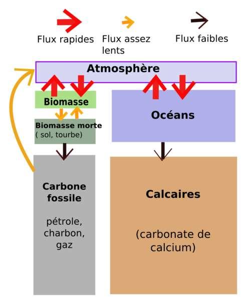 Schéma simplifié du cycle du carbone montrant les flux entre les stocks biologiques et géologiques de carbone. © Maxime Lev, Wikipédia, CC by-sa 3.0