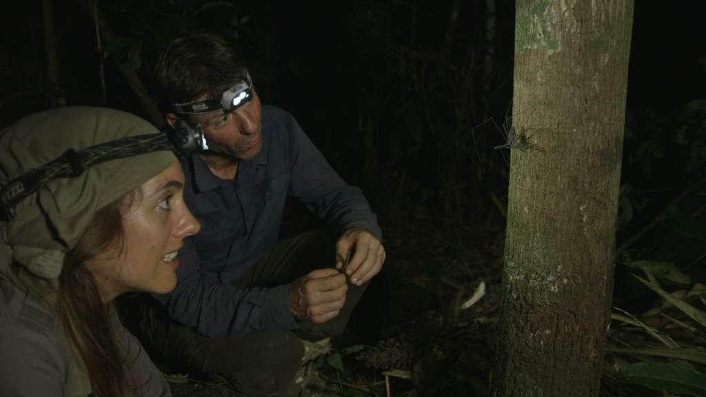Observation d'un solifuge, une araignée tropicale