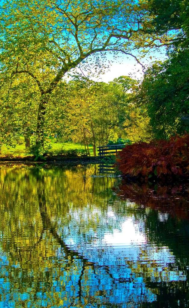 Pour réaliser un beau bassin de jardin, choisissez bien la pompe et le filtre. © Anguskirk nc-nd