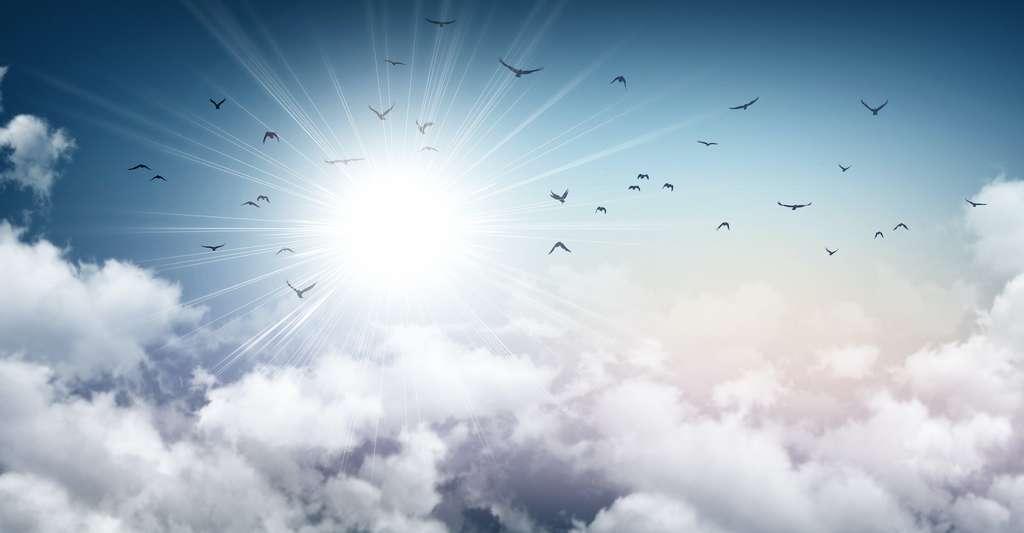 Plusieurs études montrent que les oiseaux migrateurs, les tortues ou les cétacés peuvent percevoir le champ magnétique terrestre grâce à des cristaux présents dans leur corps et se comportant comme des boussoles. © mozZz, Adobe Stock