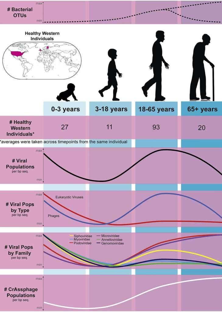 Diversité virale aux différents âges de la vie : très élevée chez les nourrissons, elle décline ensuite dans l'enfance puis remonte à l'âge adulte, avant de diminuer à nouveau après 65 ans. © Ann Gregory et al, Cell Host & Microbe, 2020