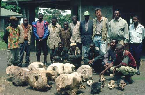 D.R. Congo Kahuzi-Biega National Park Parks, World Heritage. Park staff with elephant and gorilla skulls 2000 © UNESCO/Ian Redmond/Born Free Foundation