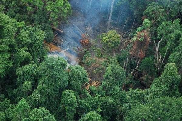 Déforestation. Environ 13 millions d'hectares disparaîtraient chaque année, dans le monde. © DP