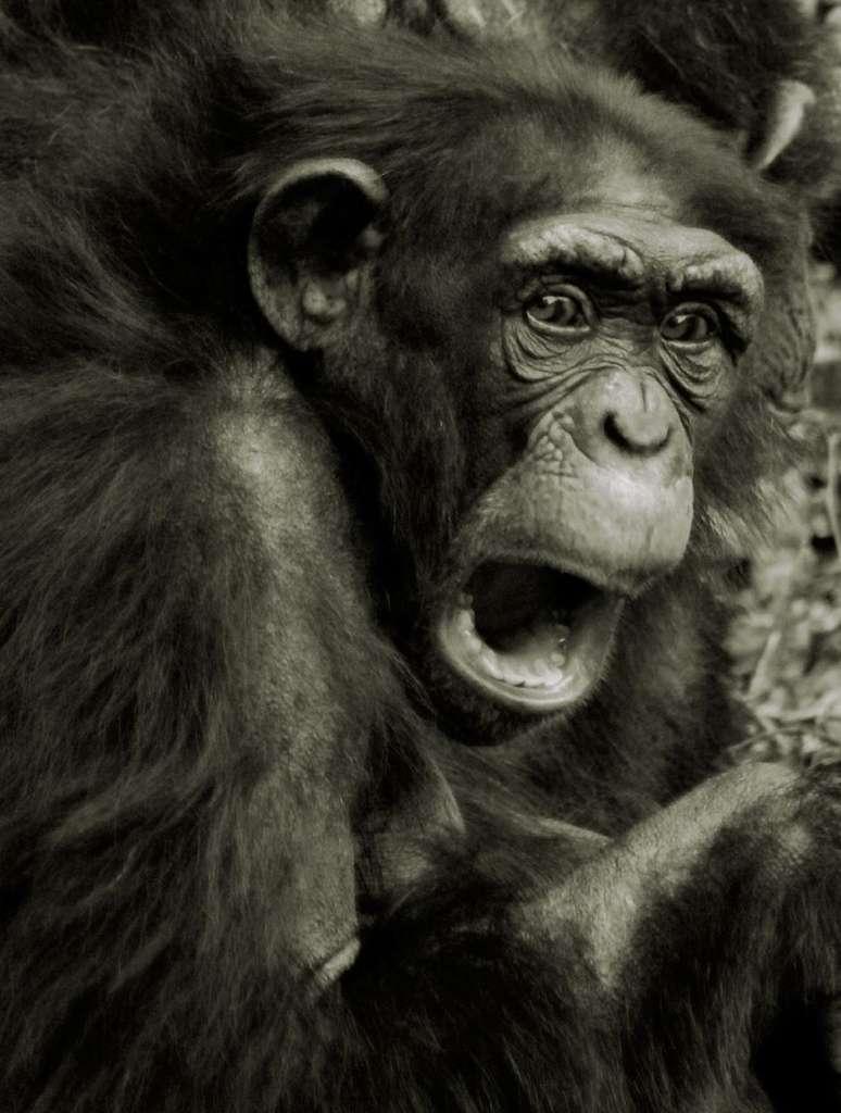 La peur, chez l'Homme comme chez le chimpanzé, se manifeste par des cris. Mais aussi par d'autres signes caractéristiques de l'émotion, comme les expressions faciales. © patries71, Flickr, cc by nc nd 2.0