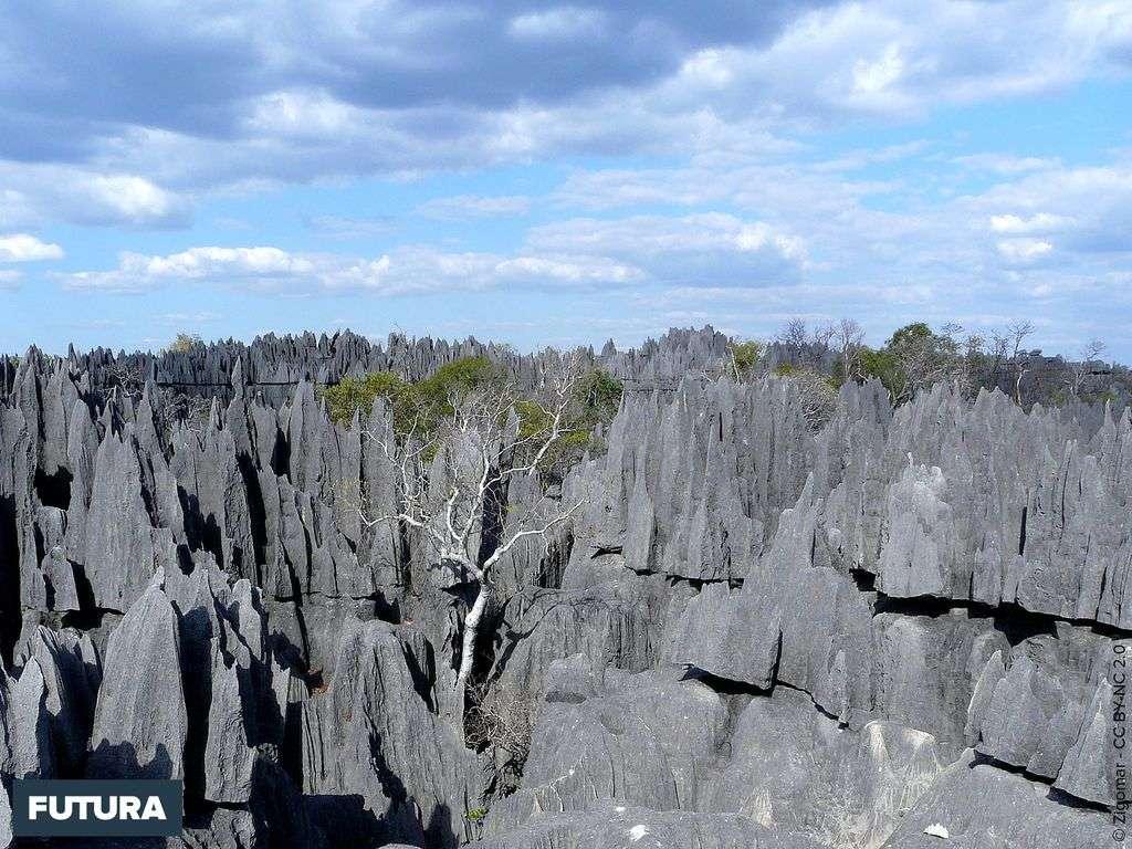 Réserve naturelle intégrale du Tsingy de Bemaraha - Madagascar