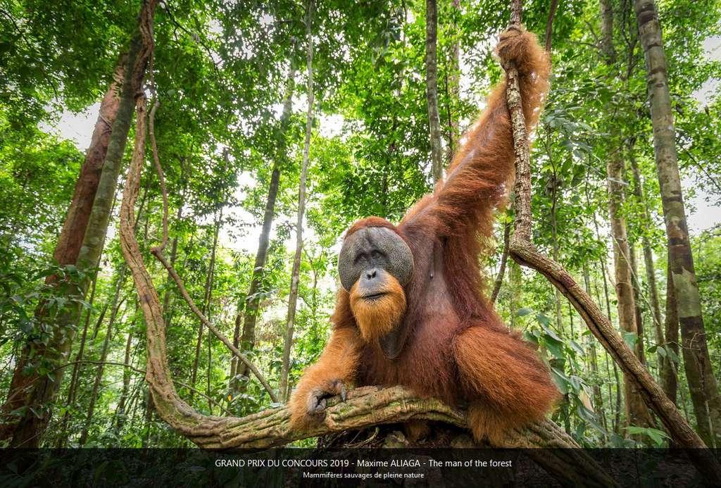 L'homme de la forêt, Grand prix du Concours 2019 Montier-en Der. © Maxime Aliaga, tous droits réservés