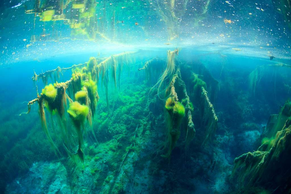 Les algues filamenteuses ou Halloween lacustre