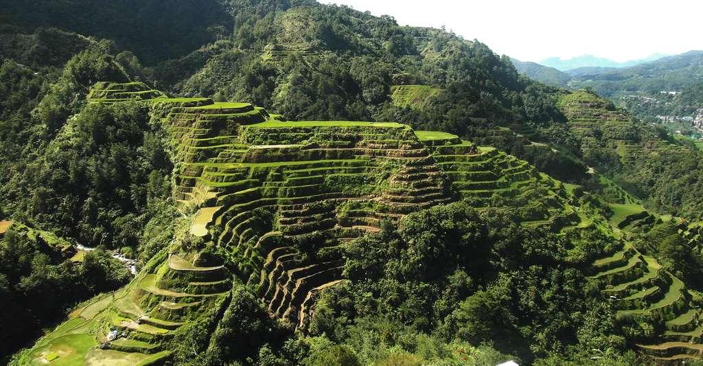 Quelle est l'origine du riz ? et son histoire ? D'où vient le riz ? En Asie, les paysages sont sculptés par les rizières en terrasses. © Yidian Cheow, Flickr, CC by-nc 2.0