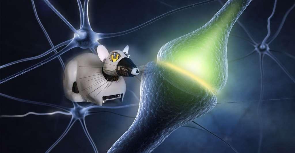 Le robot-rat intelligent. © CNRS Photothèque/ISIR/Rajau Benoît-Sashkin, shutterstock