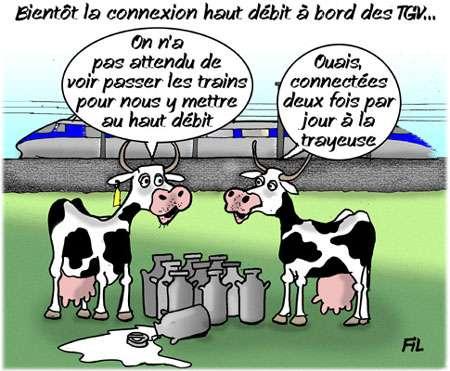 Des vaches connectées en haut débit ! © Fil