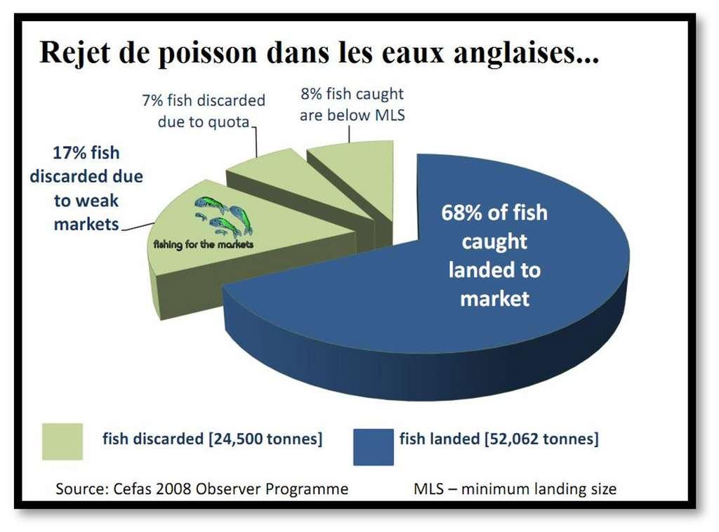 On estime que dans les eaux anglaises, en 2008, on a rejeté 24.500 tonnes de poissons, faute de marché, hors quotas ou trop petits, soit 32 % de ce qui a été remonté dans les filets ! © Cefas