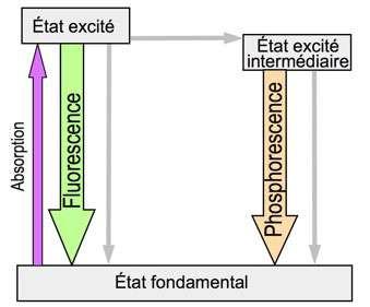 Diagramme simplifié de Perrin-Jablonski montrant la différence entre fluorescence et phosphorescence. Les flèches grises représentent des transitions non radiatives. © B. Valeur