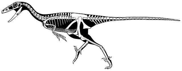 Les Trodoon ne sont représentés que par une seule espèce : Troodon formosus. © Scott Hartman, Wikimedia Commons
