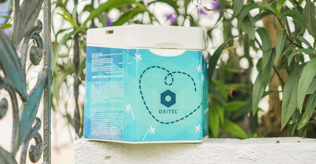 Oxitec a déjà testé ses moustiques génétiquement modifiés (GM) au Brésil, au Panama, aux îles Caïmans et en Malaisie. Ici, un exemple de ces boîtes dans lesquelles les œufs de moustiques GM se développent jusqu'à atteindre l'âge de se reproduire. © Oxitec