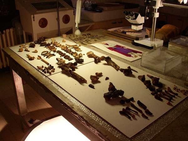 Fig. 2 - Squelette d'Arégonde mis en scène pour le tournage de The Da Vinci Code : Bloodlines. © V. Gallien, Inrap