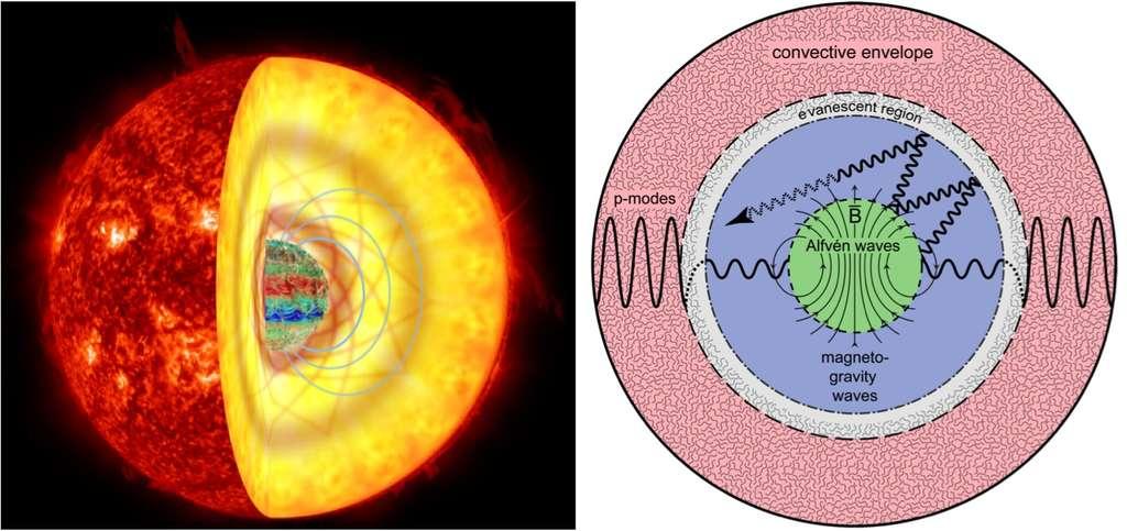 À gauche : reconstitution des champs magnétiques internes (bleu) dans le cœur d''une géante rouge. Ces champs magnétiques intenses peuvent empêcher les « ondes de gravité » d'atteindre la surface de l'étoile, les piégeant à la manière d'un « effet de serre magnétique » (ligne orange). À droite : propagation des ondes dans les géantes rouges. Les ondes acoustiques excitées par la turbulence de surface (région rose) se couplent avec des ondes de gravité qui se propagent dans l''intérieur radiatif de l''étoile géante rouge (région en bleu). En présence du champ magnétique du cœœur de l''étoile (région verte), les ondes de gravité dipolaires, décrites par le degré angulaire l=1, sont dispersées et se transforment alors en ondes de degré angulaire plus élevé. Ces ondes sont ainsi piégées dans le cœur de l''étoile puis finissent par s''évanouir (flèche en pointillé grisé). C'est ce mécanisme qui est défini comme un « effet de serre magnétique ». © Rafael A. García (SAp CEA), Kyle C. Augustson (HAO), Jim Fuller (Caltech), Gabriel Pérez (SMM, IAC), Nasa, AIA, SDO