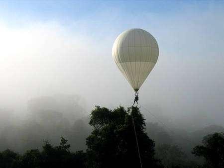 A la station CNRS des Nouragues, en Guyane française, un ingénieux dispositif d'étude de la canopée a été récemment installé par Pierre Charles-Dominique et ses collaborateurs. Il s'agit d'une « bulle des cimes », un ballon d'helium soulevant une personne, confortablement assise, et qui parcourt plusieurs chemins au-dessus de la canopée, gràce à un réseau permanent de grosses cordes qui ont été délicatement posées par hélicoptère sur les cimes des arbres. © François Catzeflis - Tous droits réservés