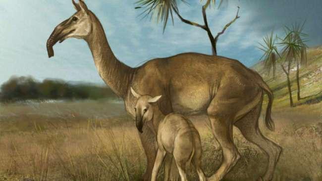 Une représentation possible d'une femelle Macrauchenia patachonica et son petit. Le cou est long et le crâne petit. L'adulte, haut de trois mètres, pouvait peser une tonne. Curieusement, les narines s'ouvrent vers le haut, ce qui a longtemps laissé penser que l'animal vivait dans l'eau. Les paléontologues préfèrent aujourd'hui voir une trompe. L'articulation inférieure des pattes semble souple, ce qui indiquerait une grande vitesse de course et une certaine agilité de mouvements. L'espèce M. patachonica est la dernière connue des litopternes, tous disparus entre -20.000 et -10.000 ans. © Kobrina Olga, Licence Creative Commons (by-nc-sa 3.0)