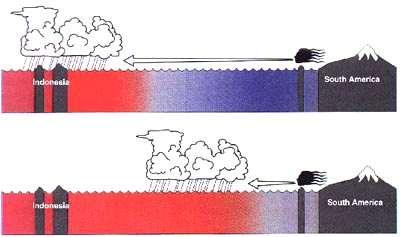 Figure 11 El Niño réarrange les distributions de pluie dans le Pacifique équatorial. Pendant des années normales (en haut), l'upwelling induit par les alizés de surface (flèche) maintient les eaux de surface du Pacifique central froides (bleu). Les fortes pluies sont confinées au dessus des eaux chaudes (rouge) qui entourent l'Indonésie sur le bord ouest du pacifique. Pendant un El Niño (en bas), les alizés faiblissent et régressent dans le Pacifique est, permettant au Pacifique central de se réchauffer, et aux zone de pluie de se déplacer vers l'est.