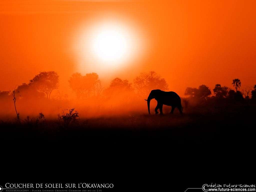 Coucher de soleil sur l'Okavango