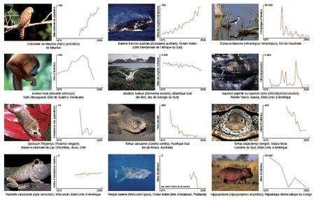 Evolution des effectifs de quelques espèces dans les cinq mille populations suivies pour le calcul de l'IPV. (Cliquez pour agrandir.) © WWF