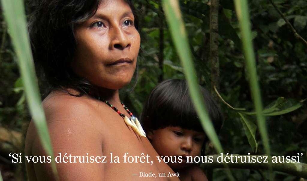 Les Awás figurent parmi les tribus les plus menacées au monde. © Survival
