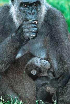 © WWF Canon - Martin Harvey